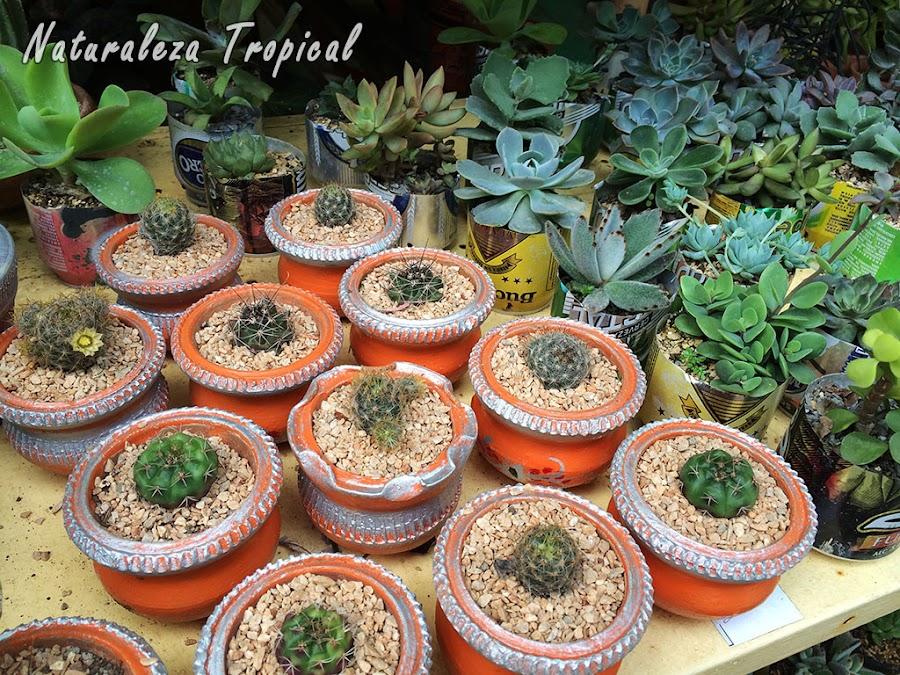 Exposición de venta de plantas suculentas