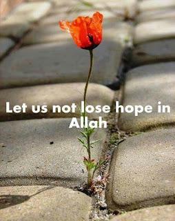 Not lose hope in Allah