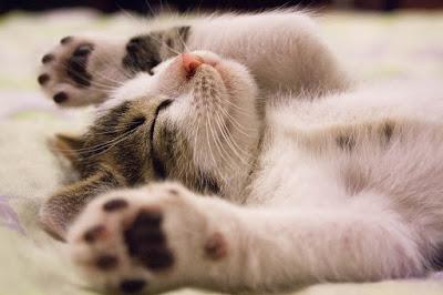 kucing, hewan, karyawan, stres, jepang, info