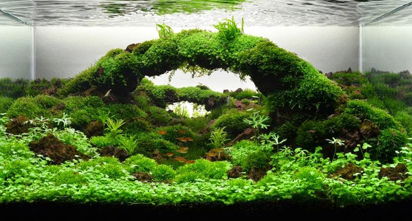 EGA DEVA: Aquascaping : Gardening Under Water