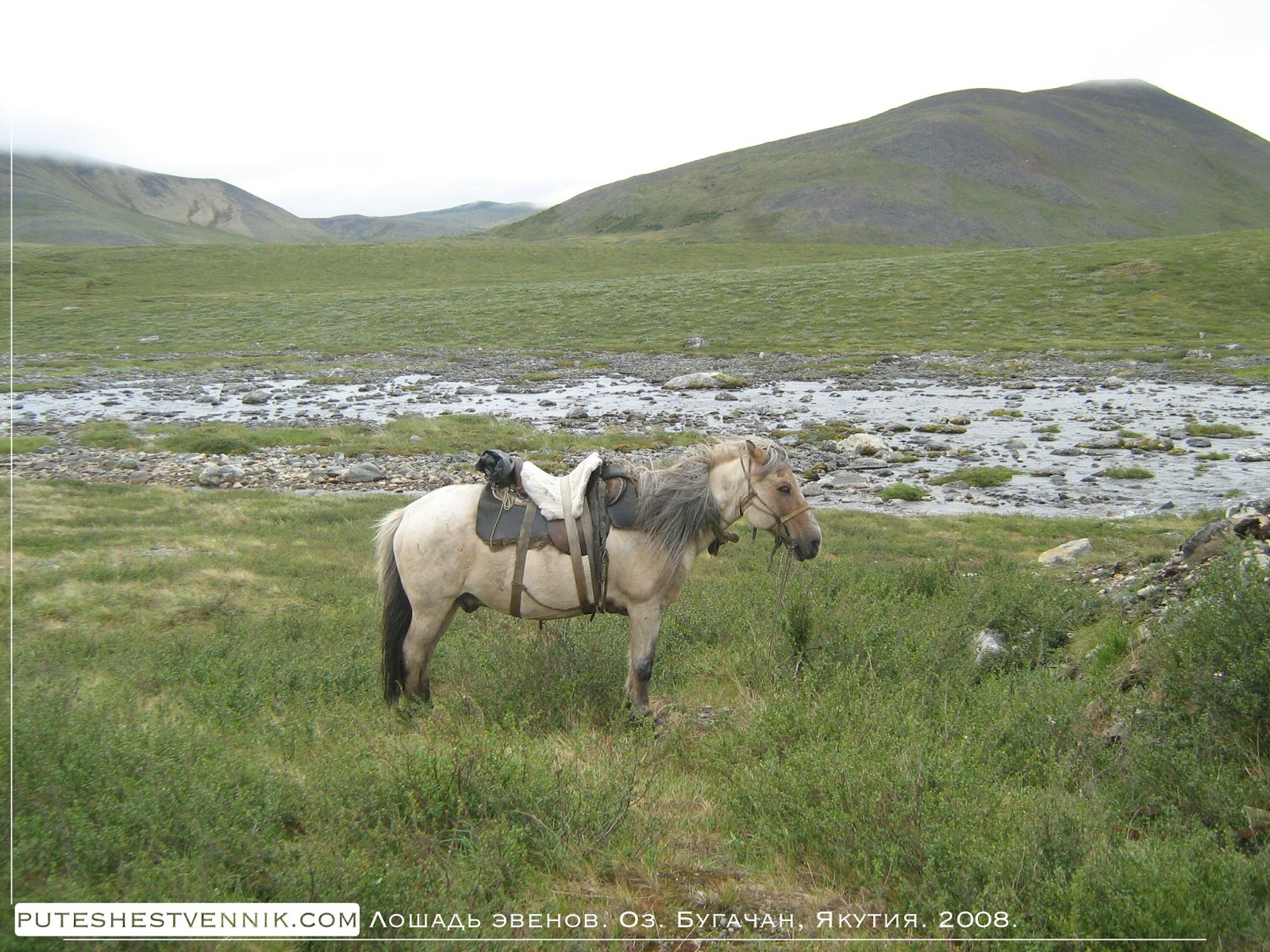 Лошадь эвенов у реки