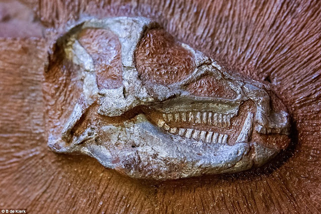 X-rays reveal secrets of tiny dinosaur trapped in rock for 200 million years
