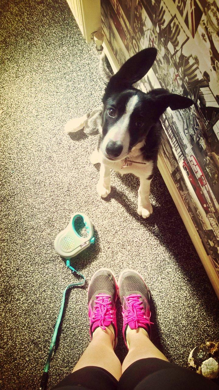 Mollie Loves Running!