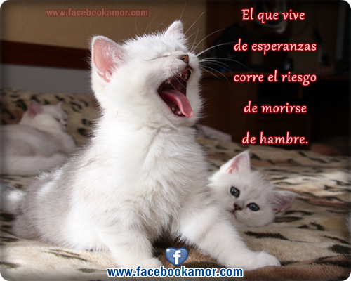 Imagenes De Gatos Animados Con Frases Imagui