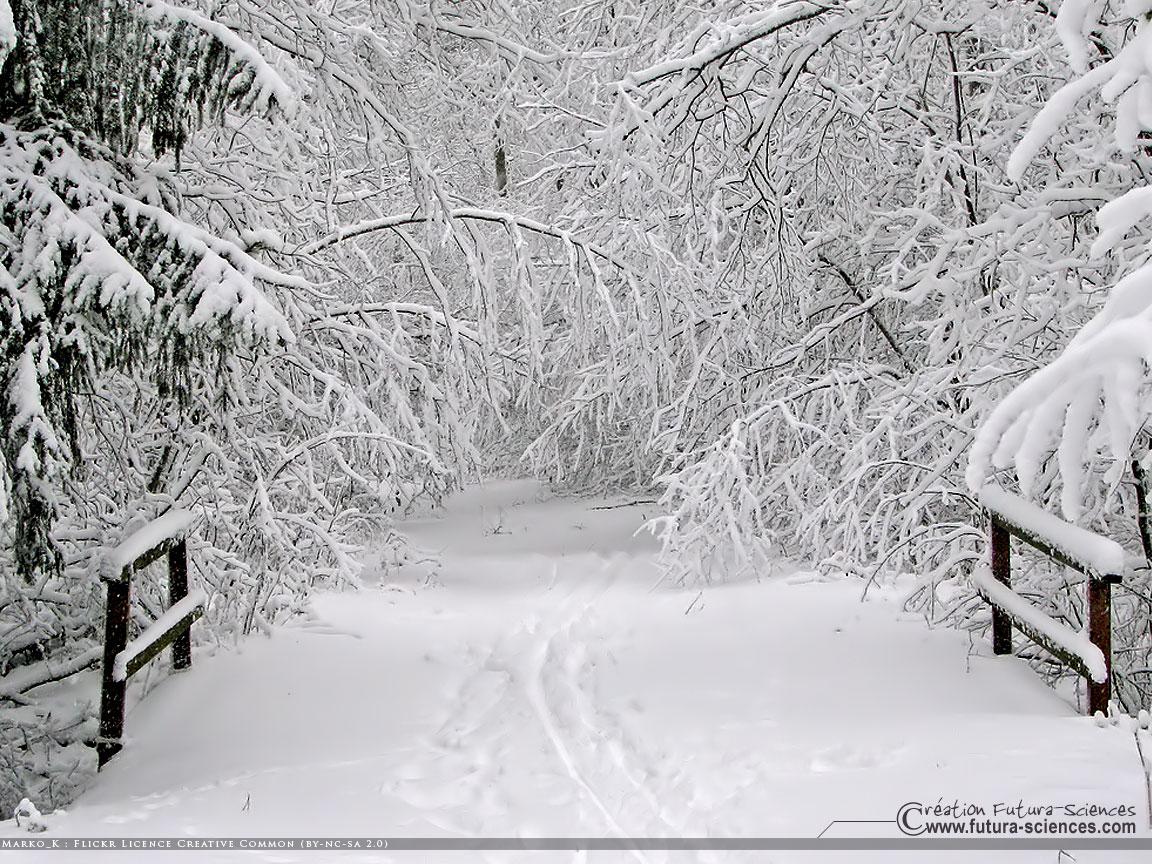 Christmas Wallpaper Snow Falling L Entit 201 Solstice D Hiver 2011 C 233 Tait Hier