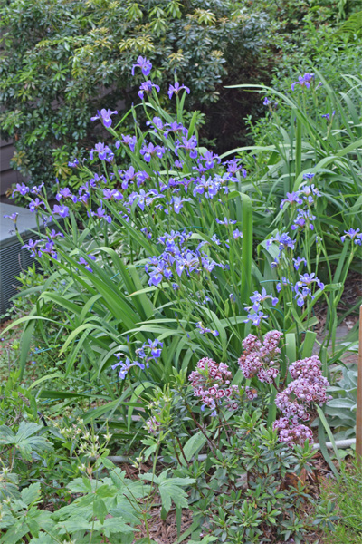 Native Plants With Adams Garden 07 01 2017 08 01 2017