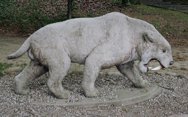 Model tygrysa szablozębnego można zobaczyć w Moryniu