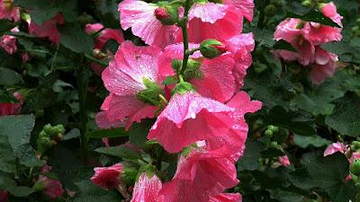 https://pixabay.com/pl/kwiaty-lato-malwy-pi%C4%99kno-2499647/