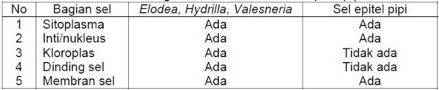 Perbandingan sel Elodea dan sel epitel pipi