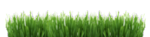 3_Grass_blured.png
