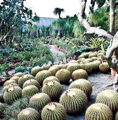 El Cuaderno de Campo: Cómo hacer un jardín de cactus y suculentas + ...