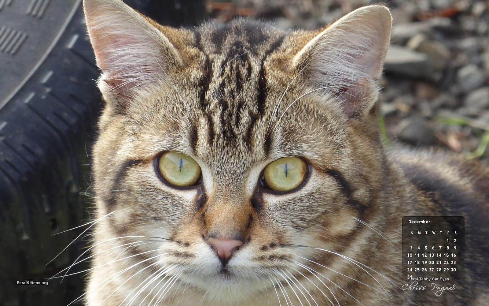 Must see Wallpaper Macbook Cat - December-16x10  Snapshot_282930.jpg