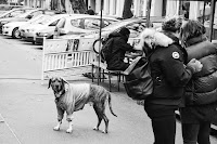 http://fineartfotografie.blogspot.de/2017/03/cool-dog-street-photography-berlin.html