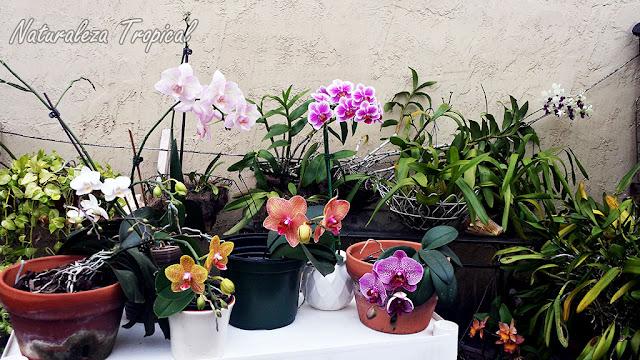 Colección de orquídeas en una terraza