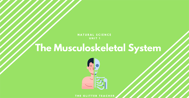 The Musculoskeletal System - Natural Science Year 6