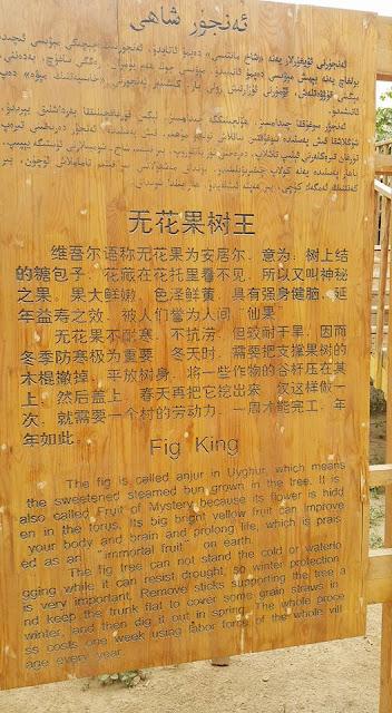 The Fig King Tree Anjur Xinjiang