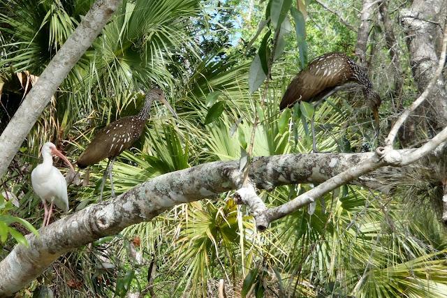 Orlando Birding Tours #BirdingWithKenny
