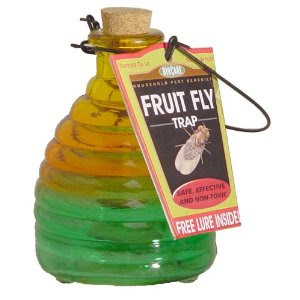Homemade Fruit Fly Trap that Really Works