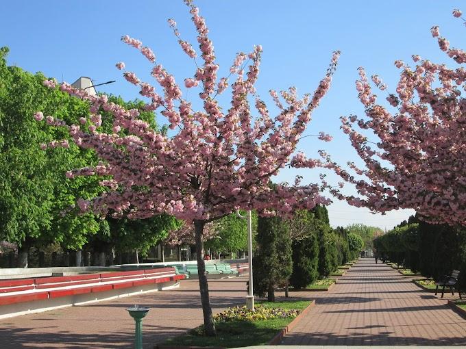 Primavara a sosit, natura s-a trezit de-a dreptul la viață, iar Centrul Civic din Municipiul Calafat a prins culoare
