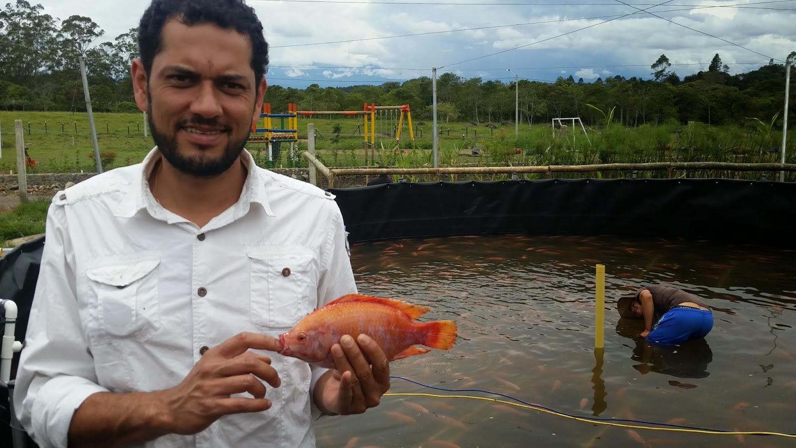 Asesor a trucha y tilapia ent rese for Cria de mojarra roja en estanques
