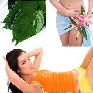 manfaat daun sirih untuk miss v vagina atau kewanitaan