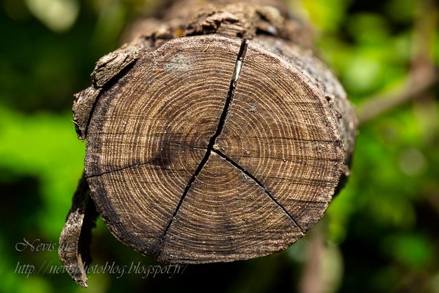 tronc arbre gros plan