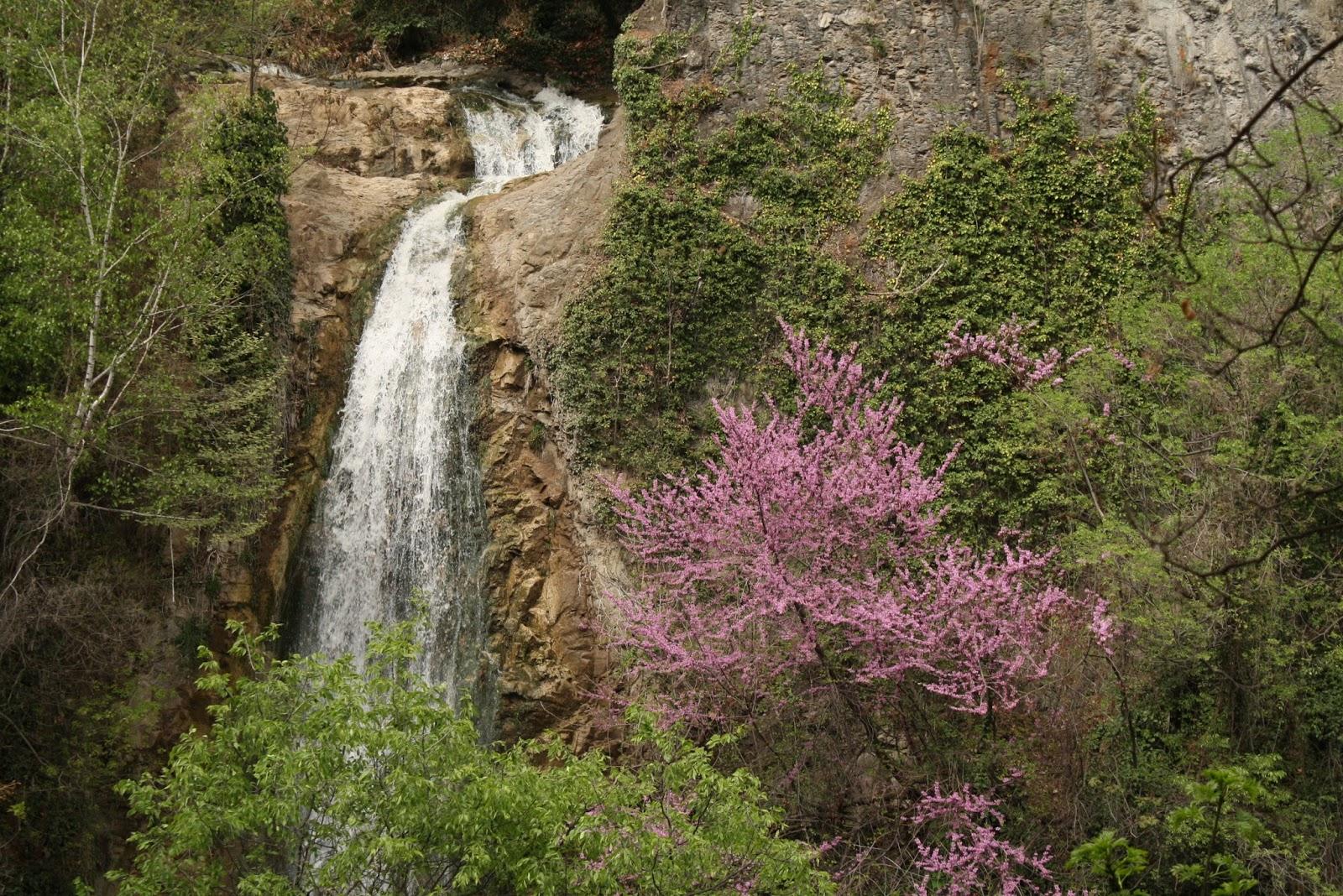 Gone Gardening: Tbilisi Botanical Garden