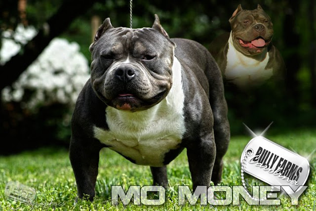 males-1-mo-money-abkc-champ.jpg
