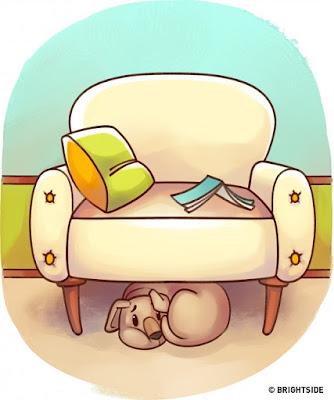 thú cưng nhà bạn không muốn tiếp xúc với người khác mà chỉ thích trốn trong gầm ghế, góc