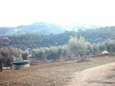 los olivares ,camino ,pantano de Pena, Beceite, Beseit, depósito, agua