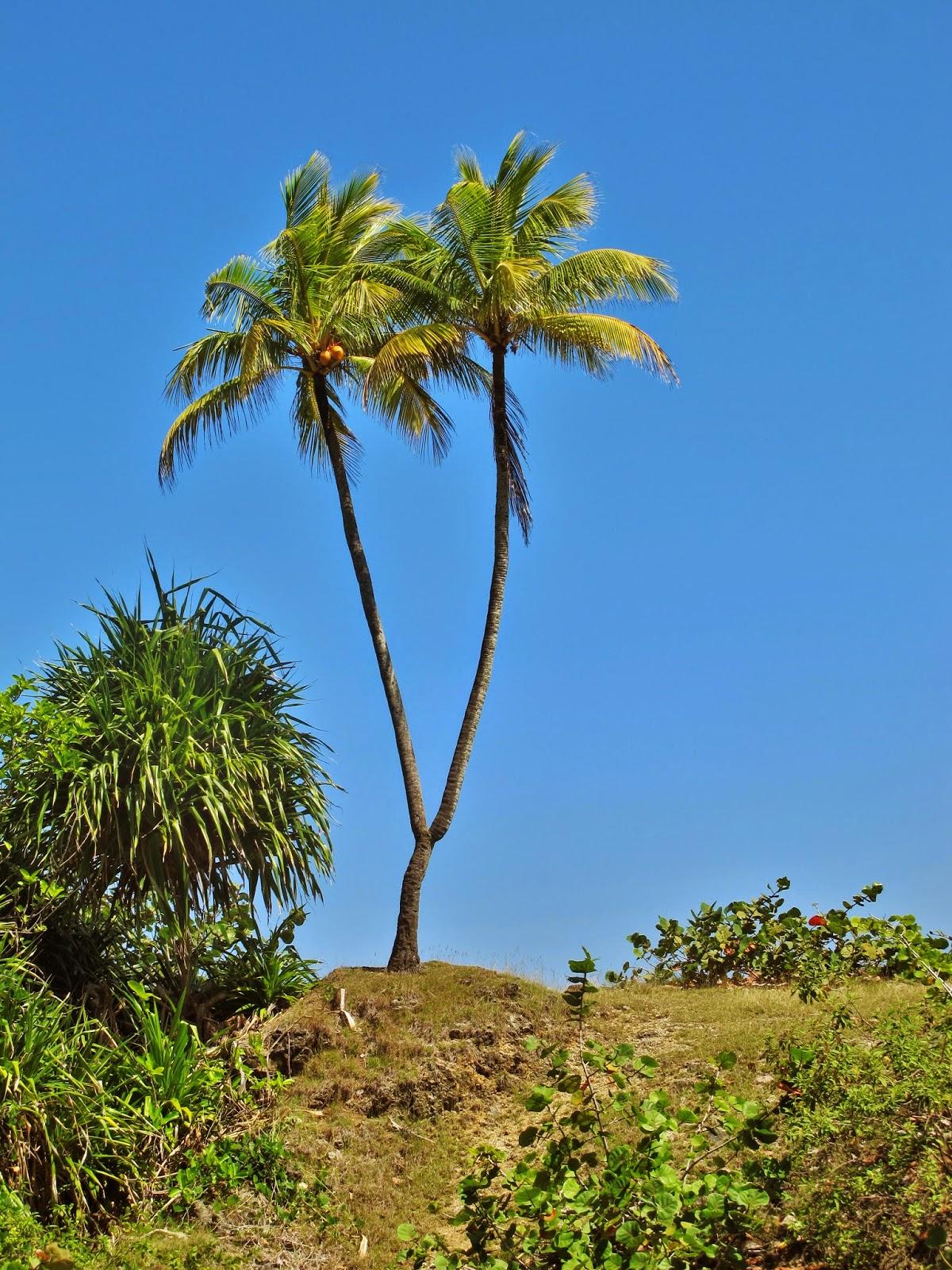 Caminho para a Boca de Yumurí, um cânion em Cuba.
