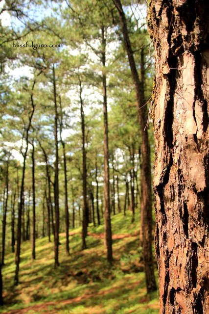 Baguio Travel Guide Blog