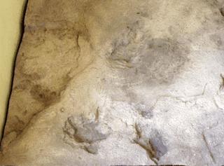 Rahasia Jejak Kaki Kuno