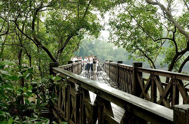 Sungei Buloh Wetland Reserve, Mangrove Boardwalk