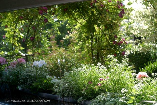balkon garten blog