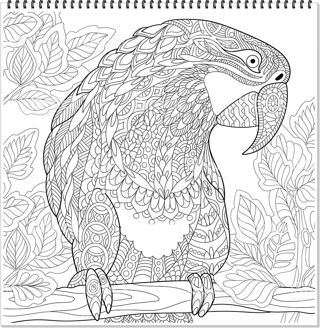Papagei Mandala ausmalbilder zum ausdrucken-Parrot mandala coloring ...