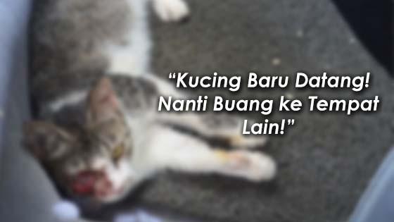 Kisah Dua Gerai dan Kucing yang Menginsafkan