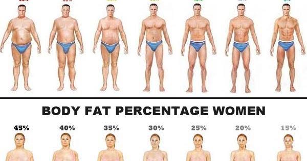 percentuale di grasso corporeo in aumento di peso