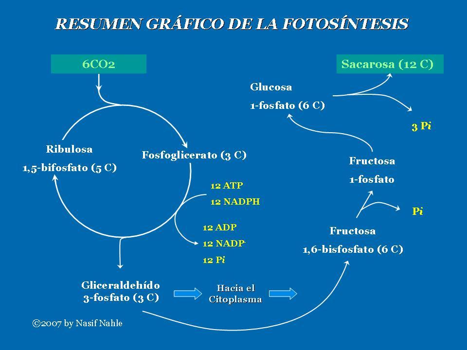 Tips para esquema del metabolismo