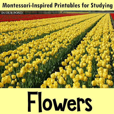 Flowers 3-Part Cards from In Our Pond #montessori #homeschooling #safariprintables #school #freeprintables #montessoriathome #montessorischool
