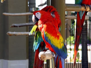 Daftar Harga Burung Makau Terbaru Rp 30juta - Rp 400Juta Jual Makaw Murah dan Paling Mahal Terbaru