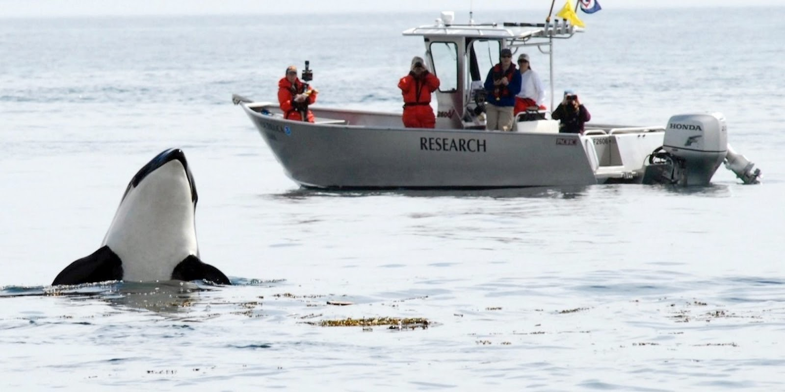 With Only 74 Southern Resident Orcas Left, The Canadian Government Announced New Measures To Protect Endangered Species