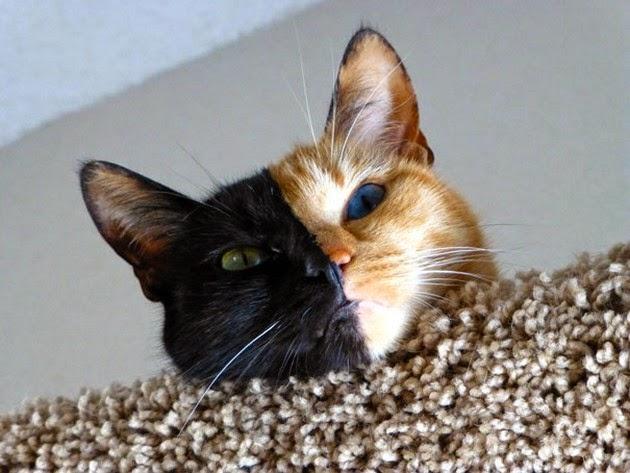 weird-cat-1