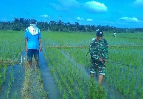 Di Desa Sidorejo, Serka Ronaldi Lakukan Penyemprotan Bersama Petani