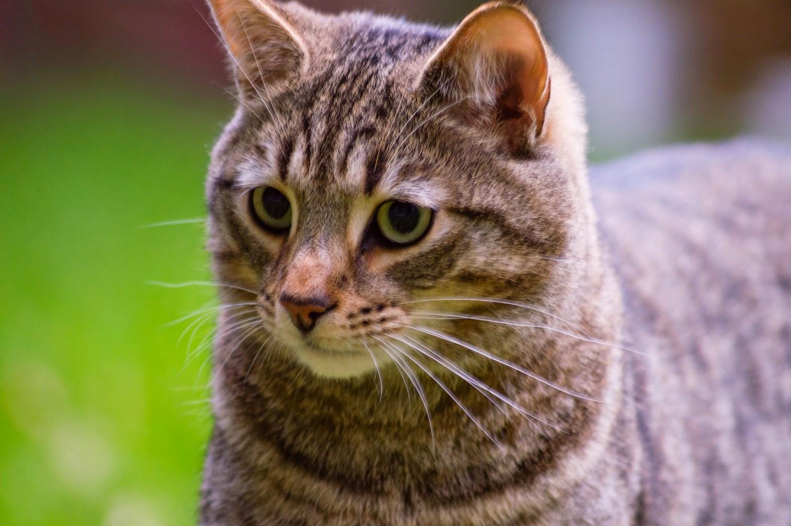 Nikon-D3200-Image-example-cat