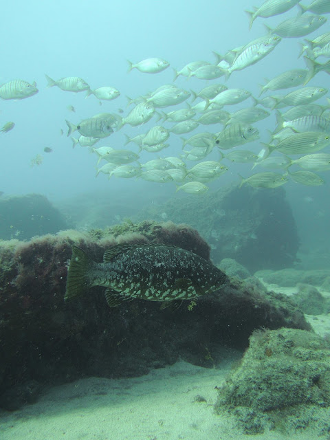 Underwater Photo of Arinaga Marine Reserve Gran Canaria