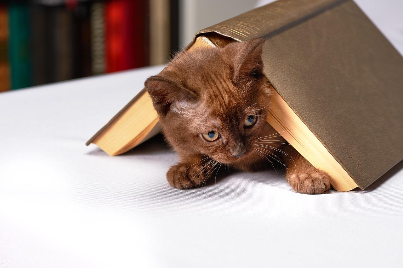 Gambar kucing dengan buku
