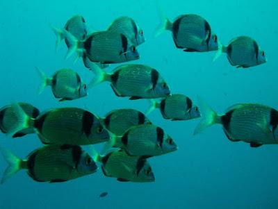 immersione ibiza principianti Punta Dive