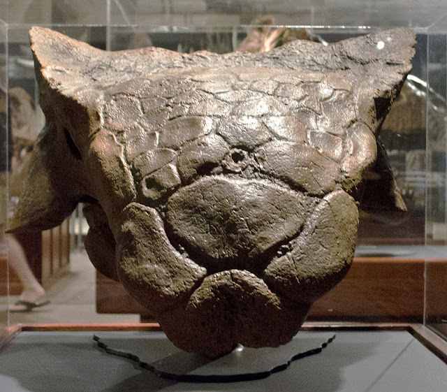 anchilozaur craniu