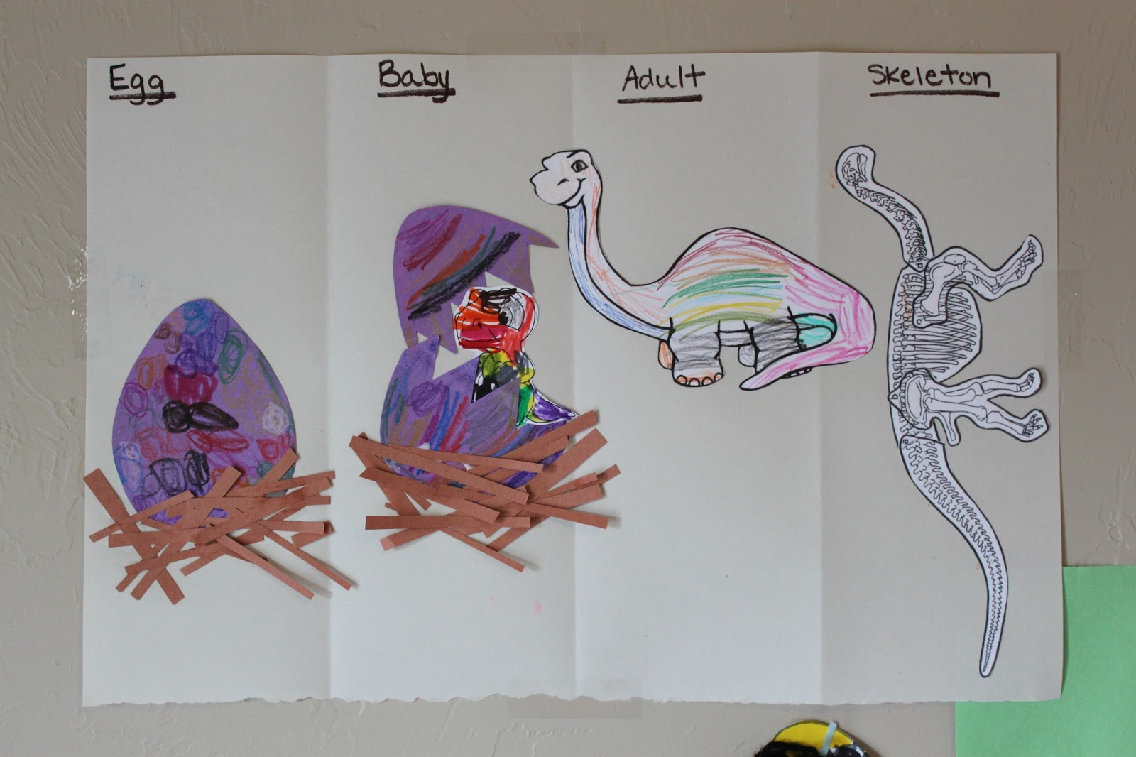 Dinosaur Life Cycle Worksheet